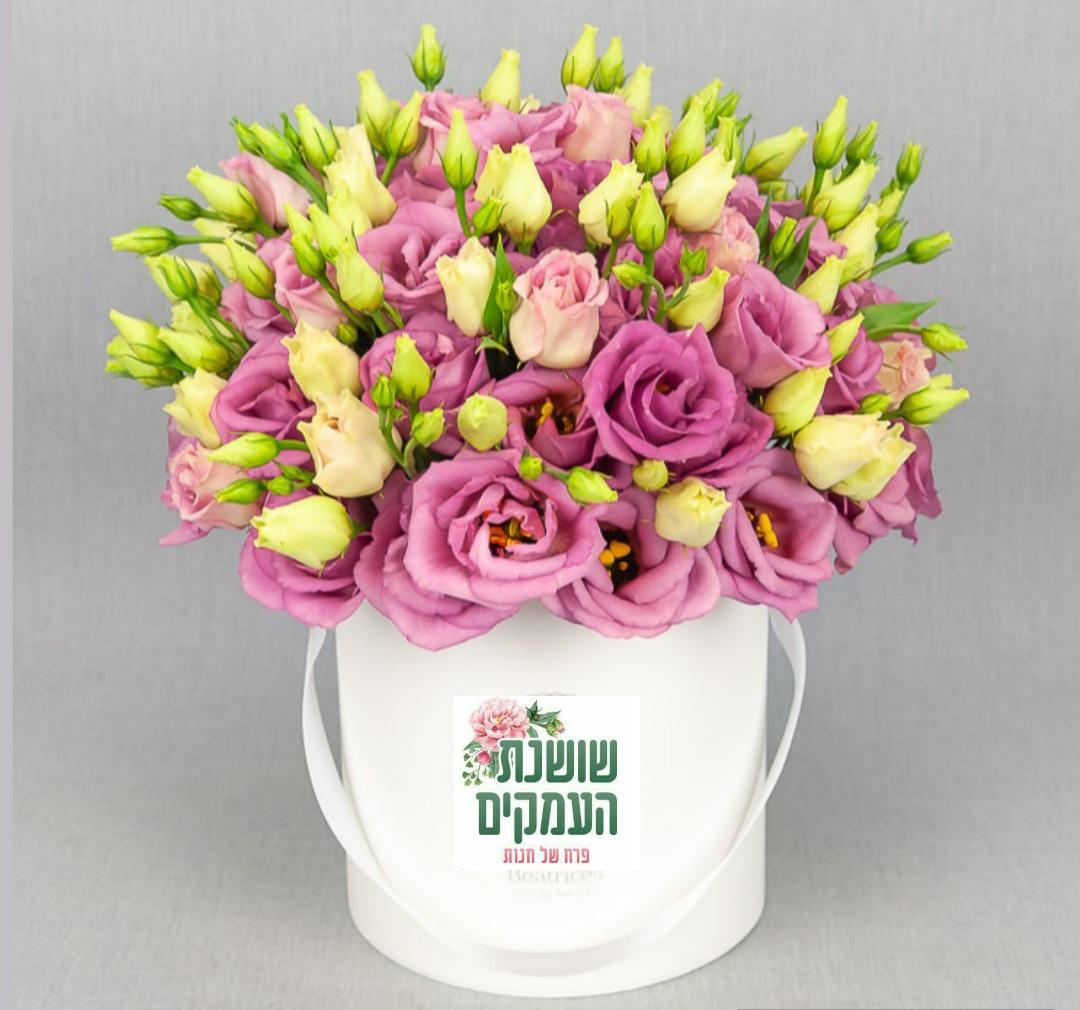 קופסאת פרחים-דגם נויה