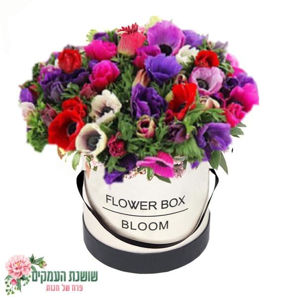 קופסאת פרחים כלניות